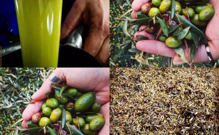 Olio di oliva della Puglia