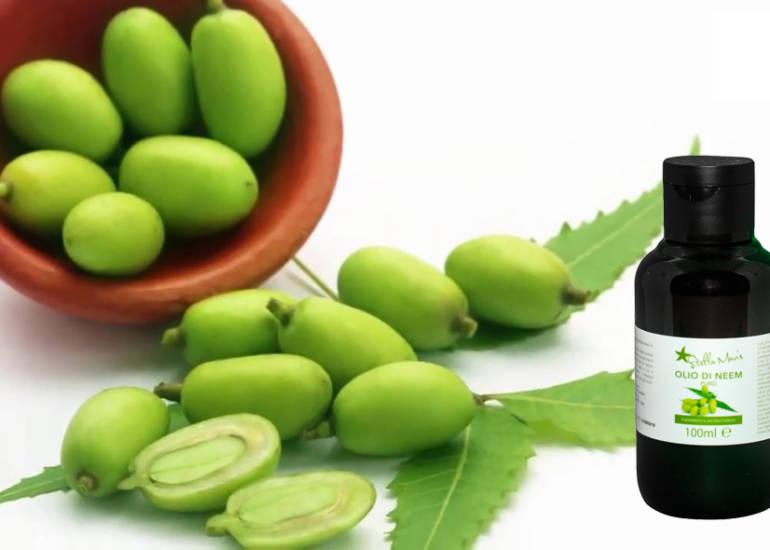 Olio di neem: la forza della natura